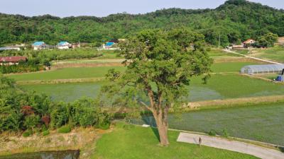 초과리오리나무 09