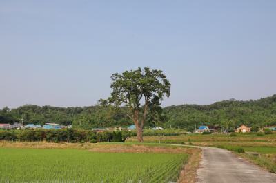 초과리오리나무 05