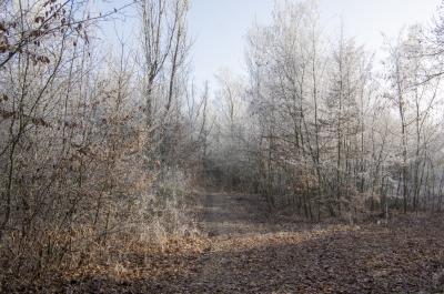 네모시츠카 스트란 숲 겨울풍경