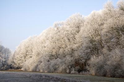 네모시츠카 스트란 숲 겨울풍경 02