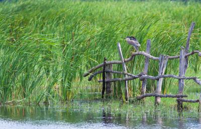 잉킷 호수  09
