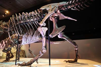 휴스턴 자연과학 박물관, 더블-와이드 공룡 탱크 덴베르사우루스 03