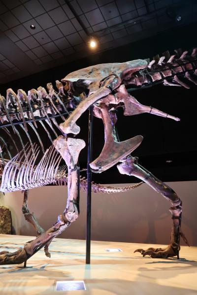 휴스턴 자연과학 박물관, 더블-와이드 공룡 탱크 덴베르사우루스 10