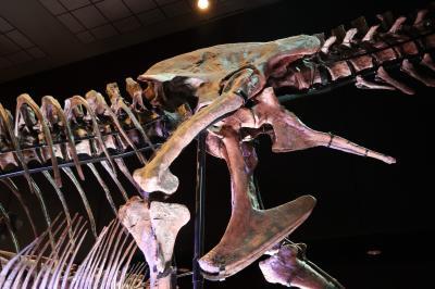 휴스턴 자연과학 박물관, 더블-와이드 공룡 탱크 덴베르사우루스 04