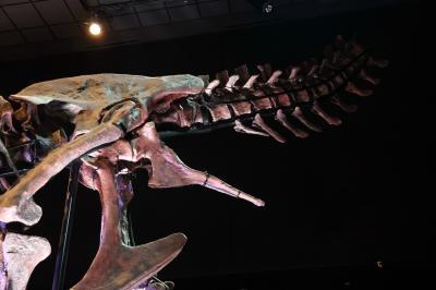 휴스턴 자연과학 박물관, 더블-와이드 공룡 탱크 덴베르사우루스 09