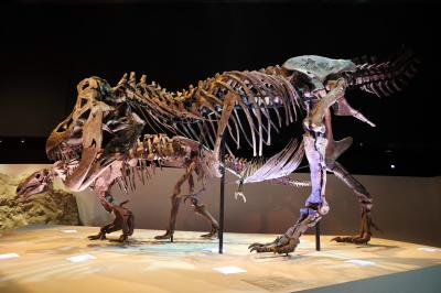 휴스턴 자연과학 박물관, 더블-와이드 공룡 탱크 덴베르사우루스 01