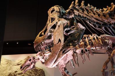 휴스턴 자연과학 박물관, 더블-와이드 공룡 탱크 덴베르사우루스 06