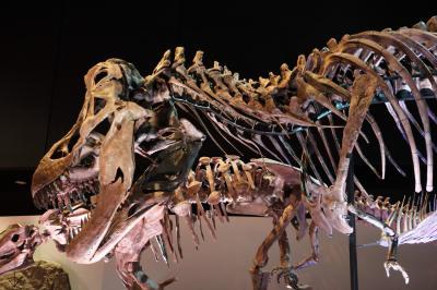 휴스턴 자연과학 박물관, 더블-와이드 공룡 탱크 덴베르사우루스 07