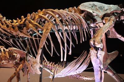 휴스턴 자연과학 박물관, 더블-와이드 공룡 탱크 덴베르사우루스 05