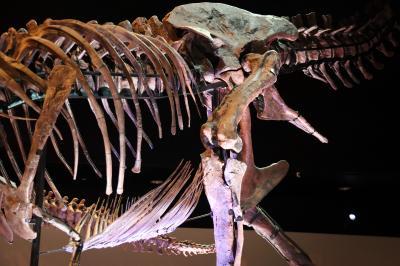 휴스턴 자연과학 박물관, 더블-와이드 공룡 탱크 덴베르사우루스 08