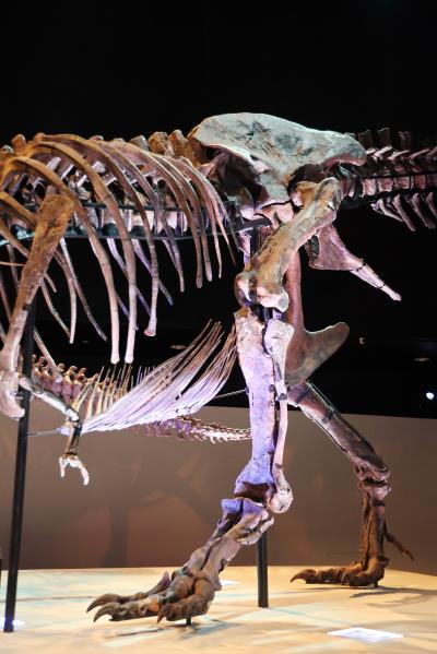 휴스턴 자연과학 박물관, 더블-와이드 공룡 탱크 덴베르사우루스 11