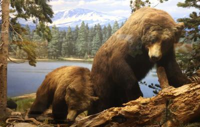 LA자연사박물관, 큰곰