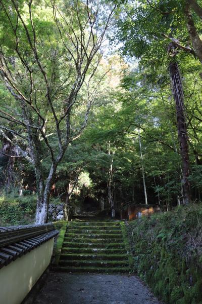 쇼콘지(효고현 지정 유형문화재-다보탑) 12