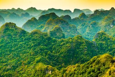 김자오 숲
