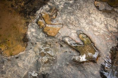 푸팍 삼림 공원  03