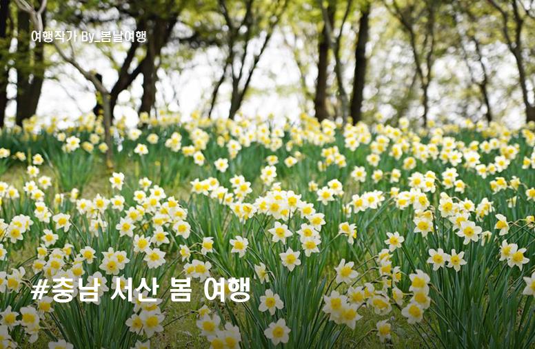 충남 서산 봄 여행