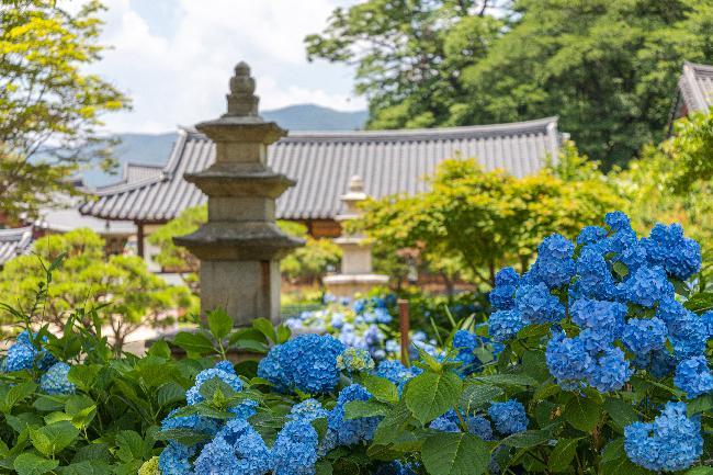 불교 나라의 신들이 만들어 낸 정원,