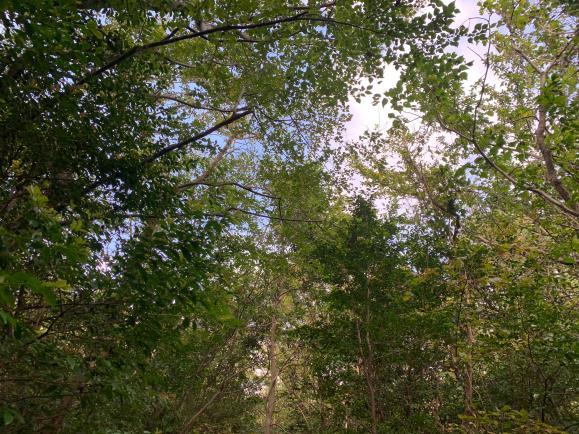 제주도 힐링의 숲, 머체왓숲길