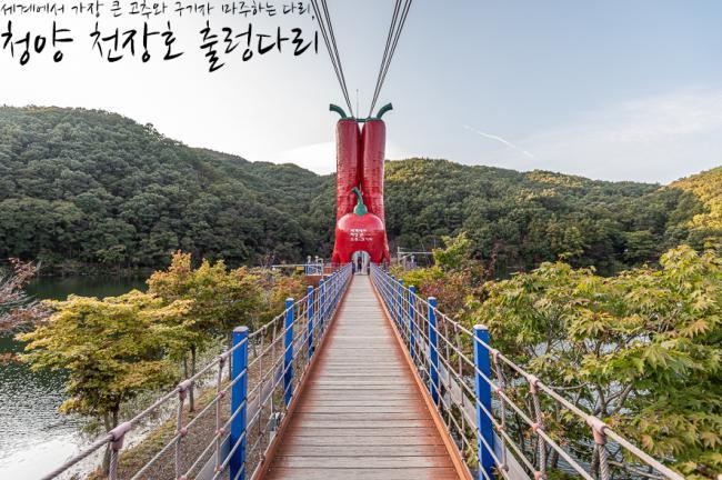 세계에서 가장 큰 고추와 구기자, 청양 천장호 출렁다리