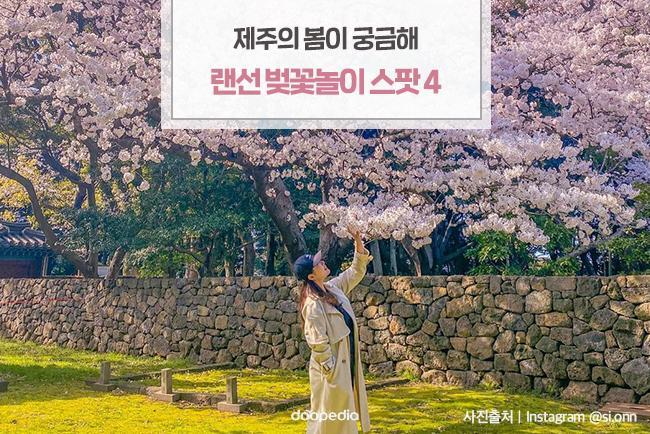 제주의 봄이 궁금해! 랜선 벚꽃놀이 스팟 4