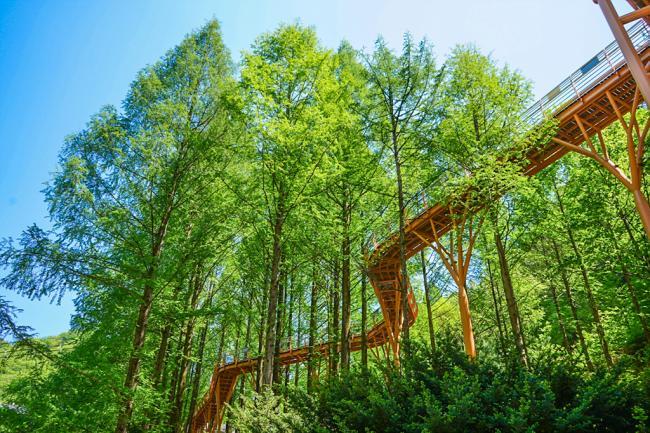 5월, 장태산 하늘숲을 걷다