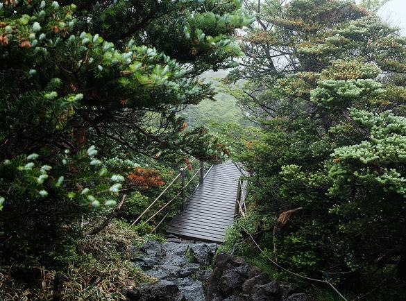 숲, 비, 바람, 안개 그리고 한라산