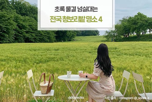 초록 물결 넘실대는 전국 청보리밭 명소 4