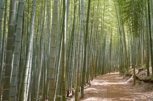 부산 기장 아홉산숲, 깊고 깊은 대나무 숲