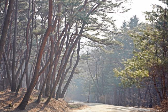 정조가 거닌 길, 왕의 숲길을 걷다