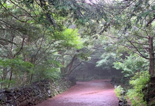 제주 비오는 날, 천년의 숲 비자림