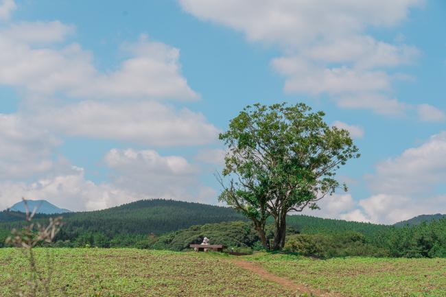 다채로운 숲, 머체왓숲길