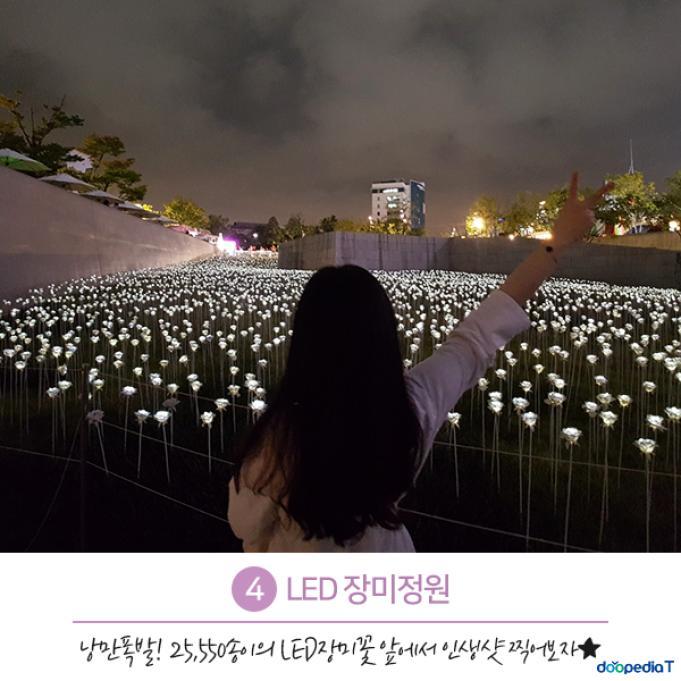 4.LED 장미정원  낭만폭발! 25,550송이의 LED 장미꽃 앞에서 인생샷 찍어보자★