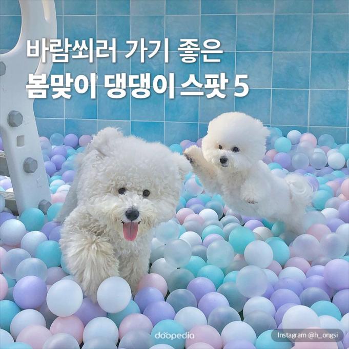 바람쐬러 가기 좋은 봄맞이 댕댕이 스팟 5    Instagram @h__ongsi