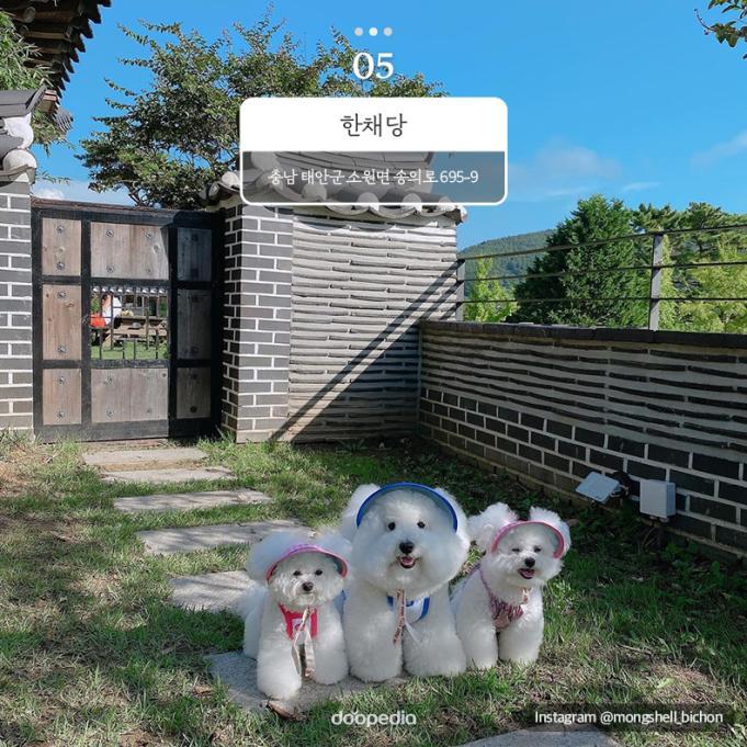 ⑤ 한채당 충남 태안군 소원면 송의로 695-9    Instagram @mongshell_bichon
